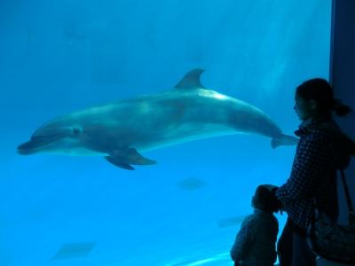 イルカに再会