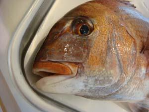 魚の本 撮影風景