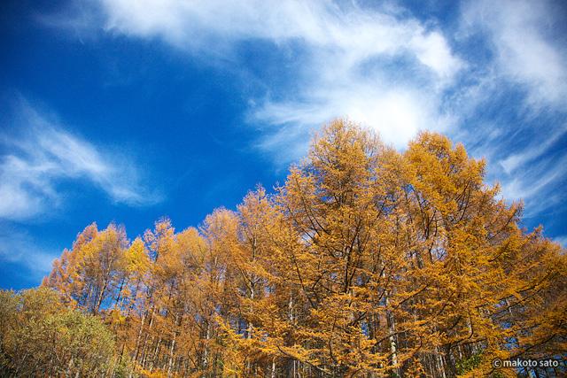 カラマツの紅葉と秋空