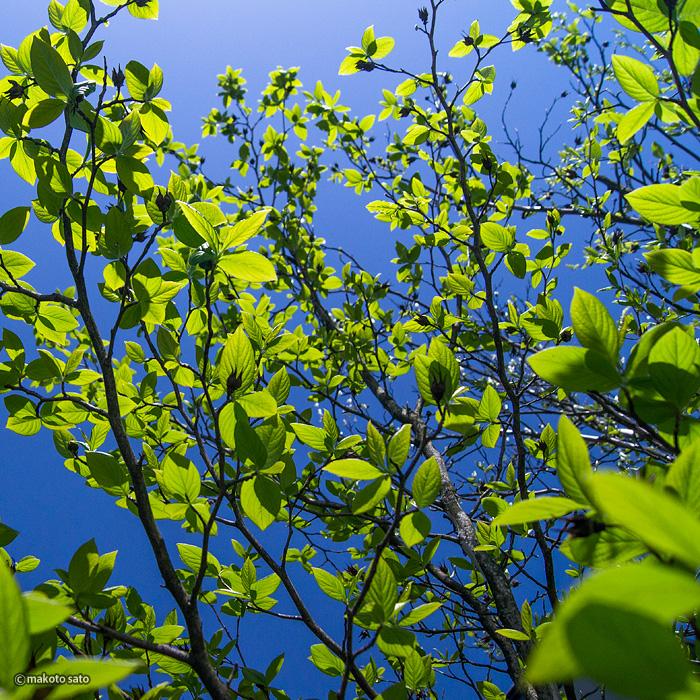 巡り来る新たな緑の季節