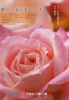 091024_rose