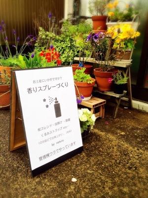 20140524shibazakura1