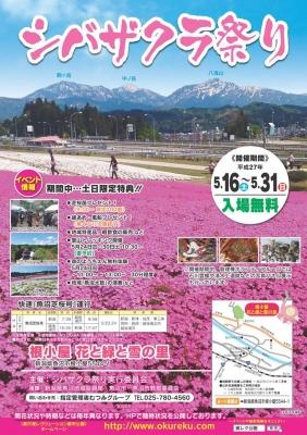 201505shibazakura