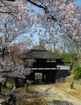 2010_04_26三の門-桜