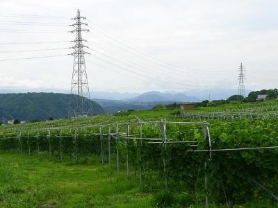 2013_07_15ぶどう畑「マンズワイン小諸ワイナリー」