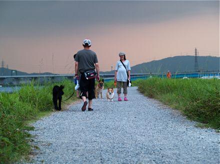 夕暮れのお散歩コース