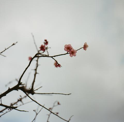 2_13_minori.jpg