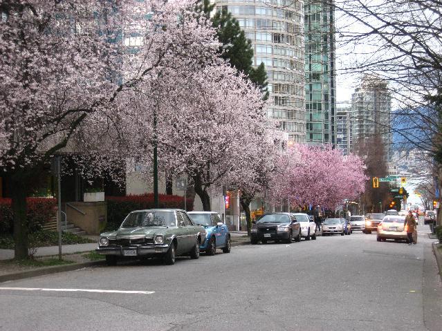 Haro street 1