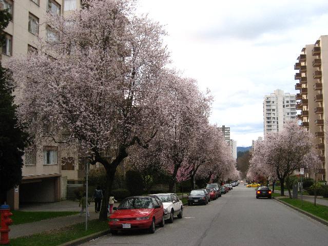 Haro street 2