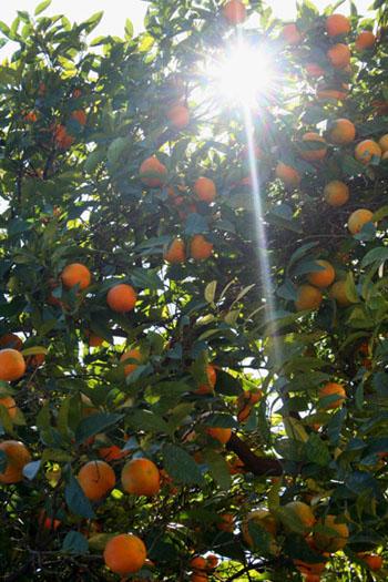 Naranja!