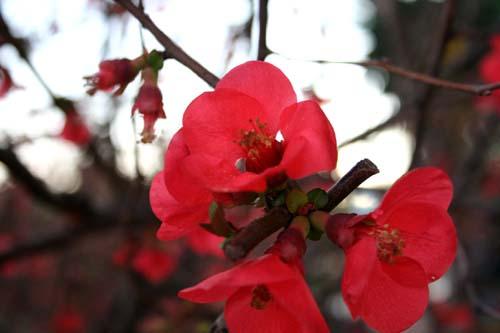 椿っぽい花