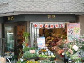昨年末くらいにオープンしたこのお店。無印良品の花部門です。 用賀はただでさえお花が安かったのですが、花良の激安ぶりは、花屋 の勢力地図を変えたかもしれません。