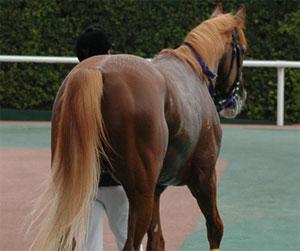 柴田大知騎手5 画像