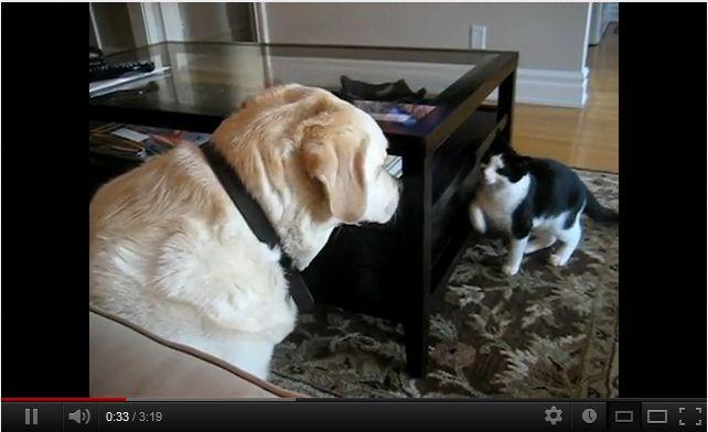 猫パンチvs犬