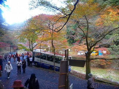 この川の周辺も紅葉が綺麗です!