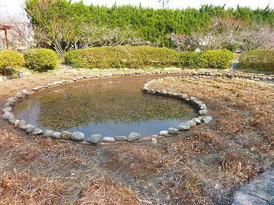 水が少ないと池の形が分かります。