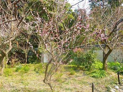 椿も有名なんですが今回は梅の写真です。(笑)