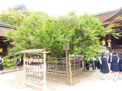 梅の時期にはこの木も綺麗です。
