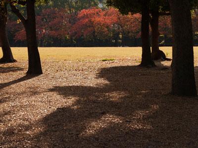 大阪城公園(Nさん)