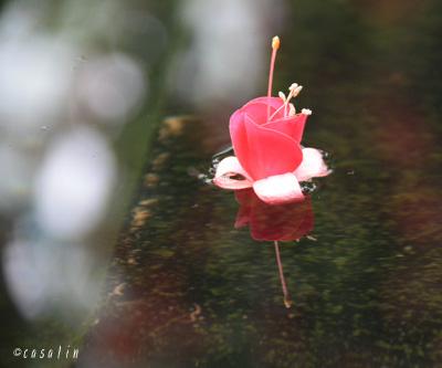 花鳥園casalin