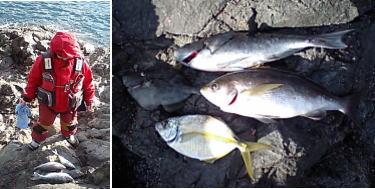 魚を眺める私と今日の私の釣果