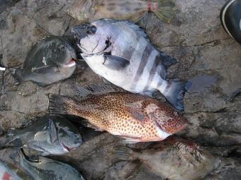 高級魚ずらり