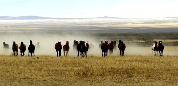 ranch (7).jpg