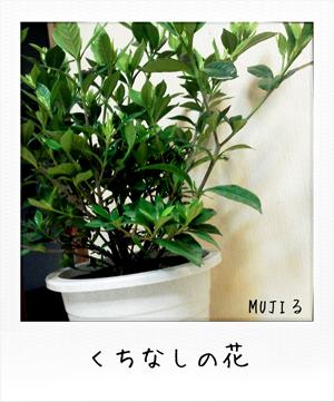 MUJIる ブログ くちなしの花 画像