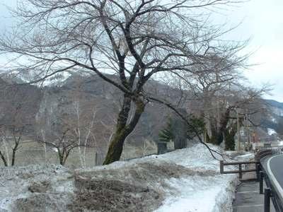 折れた桜の枝