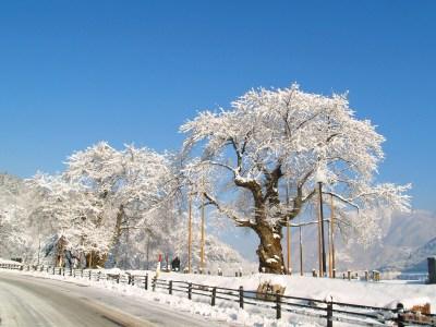 平成21年2月12日の荘川桜