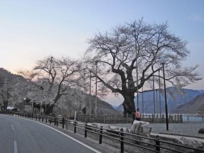 平成21年4月28日の荘川桜