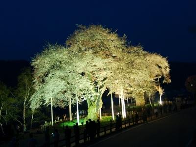 平成22年5月5日の荘川桜ライトアップ