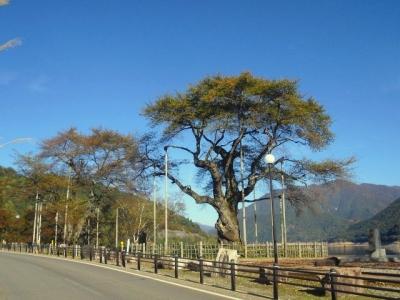 平成22年10月23日の荘川桜の紅葉