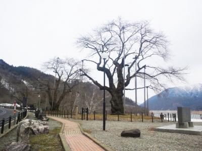 平成25年3月27日の荘川桜