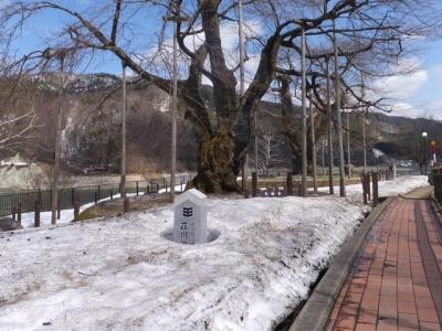 H27.4.9の荘川桜