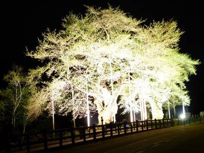H27.5.3の荘川桜ライトアップ