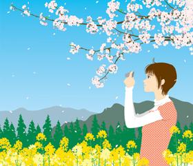 桜と菜の花イラスト