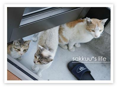 餌をねだる猫たち