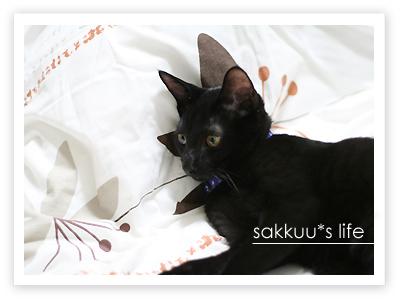 念願の黒猫ちゃん