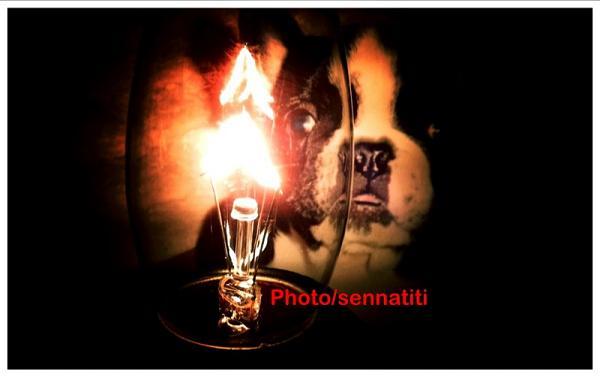 Light&senna