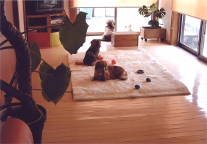 お部屋のイメージ01