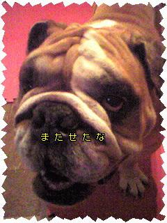 Image906.jpg