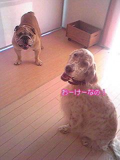 Image977.jpg