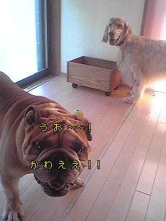 Image986.jpg