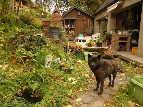 庭の水槽です。