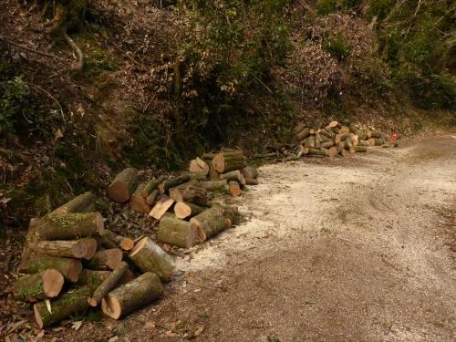 伐採し終えた薪の山