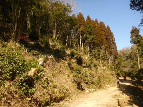 伐採を進めている山です。