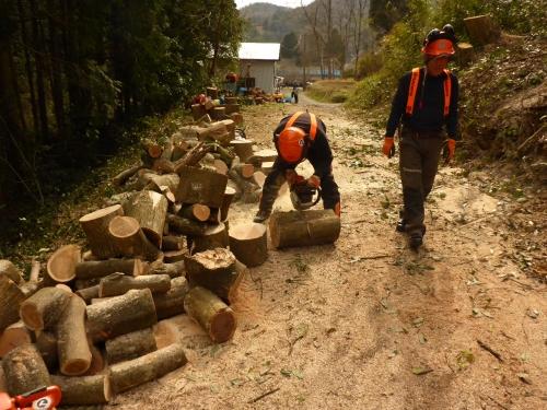 ことに伐採した雑木を整理しています。