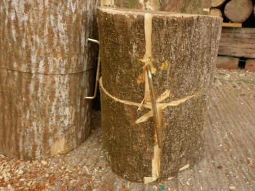 伐採した雑木の中になったエノキ