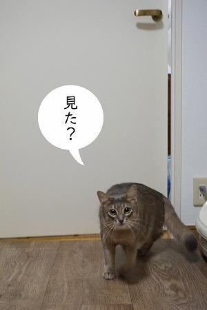 ニア5.jpg